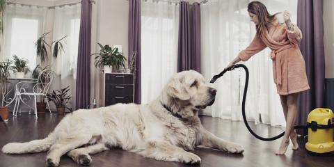 3 Reasons You Should Leave Pet Stain Removal to a Professional, Chesterfield, Missouri