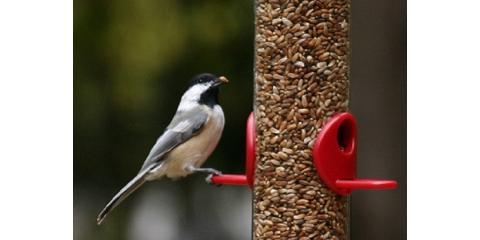 7 Basic Backyard Bird Feeders Series, Lincoln, Nebraska