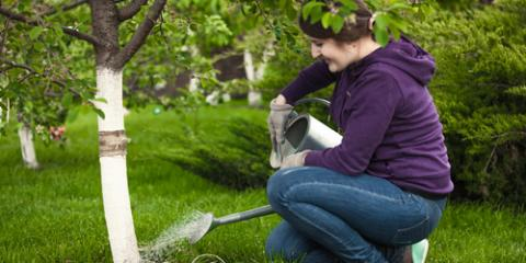 3 Factors to Consider Before Watering Your Trees, Milford, Ohio