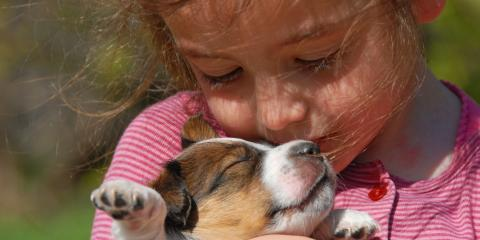 3 Reasons to Keep Your Pet Vaccinations Up to Date, Wisconsin Rapids, Wisconsin