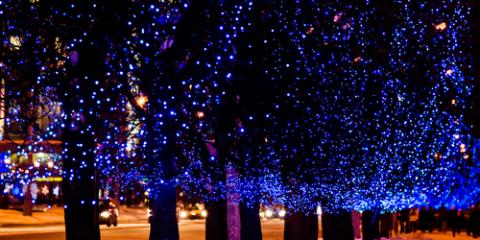 Can You Keep Lights on Trees All Year Long?, York, South Carolina