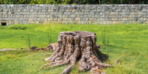 What Stump Grinding Is & Why It Should be Done, York, South Carolina