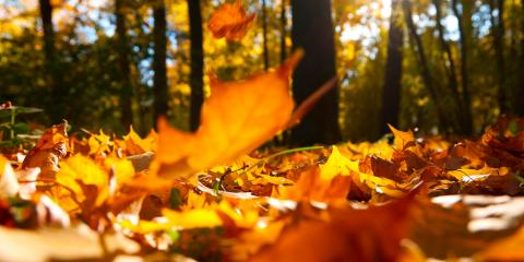 3 Maintenance Tasks to Complete This Fall to Avoid HVAC Repair, Chillicothe, Ohio