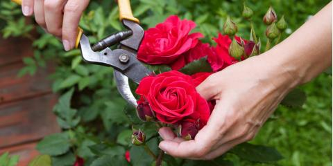 Choose the Right Garden Supplies to Cultivate Your Summer Landscape , Bethel, Ohio