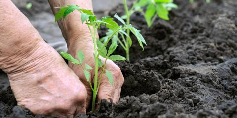 3 Gardening Tips for People With Chronic Pain, Maple Grove, Minnesota