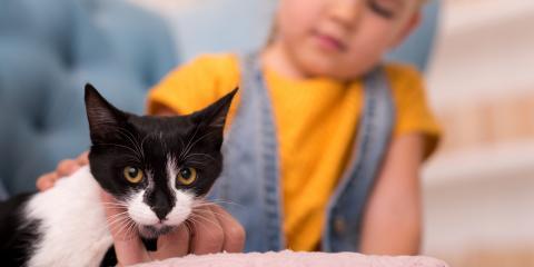 3 Best Ways to Help Your Cat Socialize, Churchville, New York