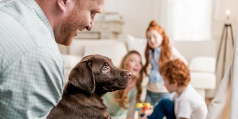 3 HVAC Maintenance Tips for Pet Owners, Cincinnati, Ohio