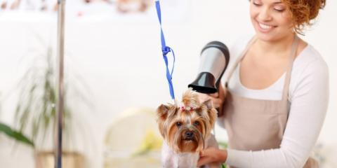 3 Ways to Prepare for Your Puppy's First Trip to the Groomer, Springfield, Ohio