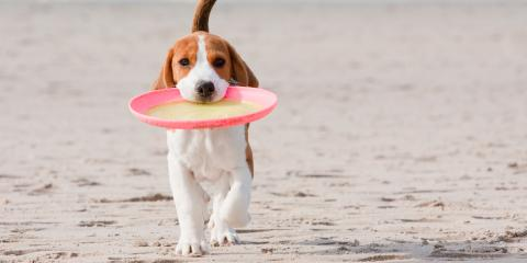 How to Keep Your Dogs Safe During the Summer Months, Miami, Ohio