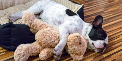 5 Tips to Help Your Dog Sleep at Night , Cincinnati, Ohio