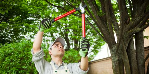 5 Tell-Tale Signs a Tree Needs Pruning Services, Cincinnati, Ohio