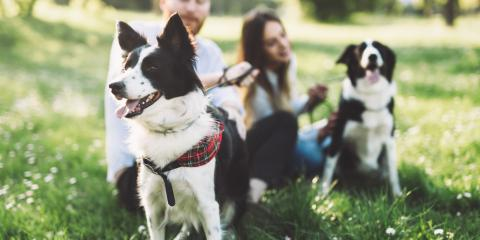 Top 3 Must-Attend Dog Events in Cincinnati This Summer, Newport-Fort Thomas, Kentucky