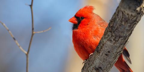 How to Attract More Birds to Your Property, Cincinnati, Ohio