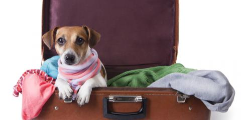 3 Tips to Long-Distance Moving With Pets, Cincinnati, Ohio