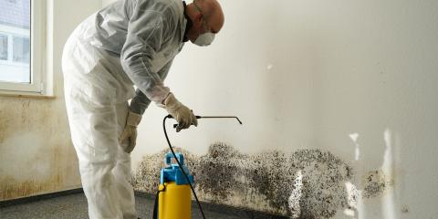 4 Frequently Asked Questions About Mold Removal After a Disaster, Fairfax, Ohio