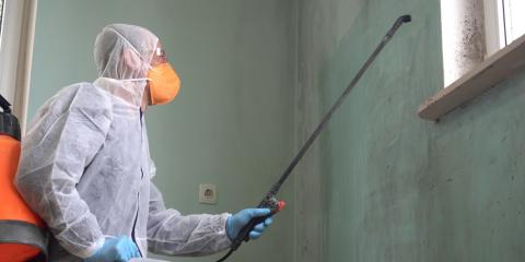 3 Reasons to Hire a Specialist for Mold Removal, Sharonville, Ohio