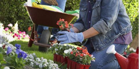 Top 5 Gardening Tips For Beginners, Colerain, Ohio