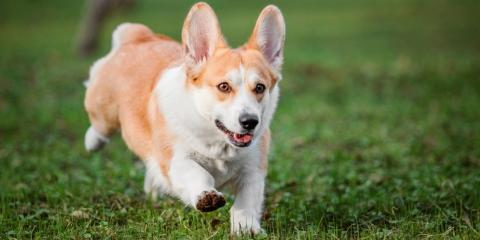 5 Human Foods That Are Good for Your Dog, Springfield, Ohio