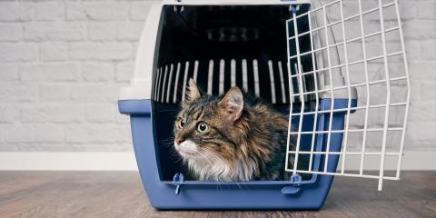 How to Get Your Cat Into a Carrier, Green, Ohio