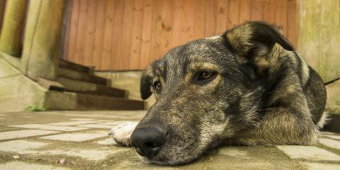 Cincinnati Vet Clinic Shares 5 Reasons Why Dogs Vomit Undigested Food, Cincinnati, Ohio