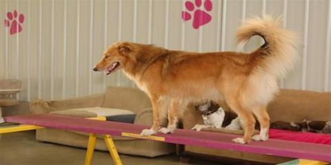 Cincinnati 39 s best doggy day care explains the benefits of for Best doggy day care