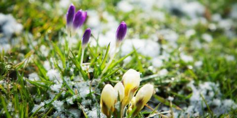 FAQ: Which Flowers Will Survive the Winter?, Colerain, Ohio