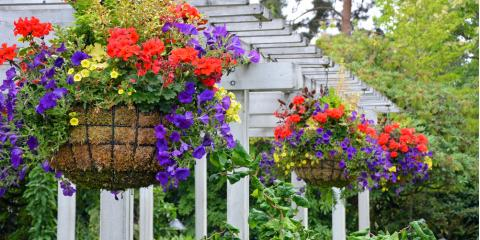 3 Tips to Keep Hanging Flowers Blooming Throughout the Summer, Colerain, Ohio