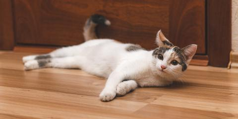 5 Tips for Protecting Hardwood Floors When You Have Pets, Green, Ohio
