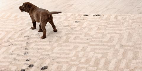 3 Health Effects of Pet-Stained Carpets, Norwood, Ohio