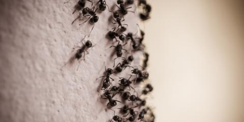 3 Tips on How to Get Rid of Ants From Cincinnati Pest Control Experts, Hebron, Kentucky