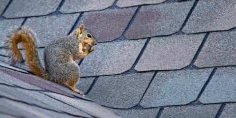 3 Ways to Tell if You Have Critters in Your Attic, Sycamore, Ohio