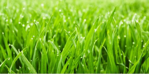 How to Reduce Your Carbon Footprint with Greener Lawn Care, Cincinnati, Ohio
