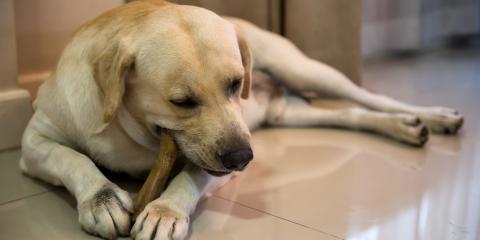 5 Treats to Improve Your Dog's Dental Health, Sycamore, Ohio