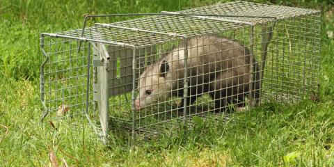 Safety Tips When Encountering Opossums, Miami, Ohio