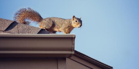 5 Signs There Are Squirrels Inside Your Home, Springfield, Ohio