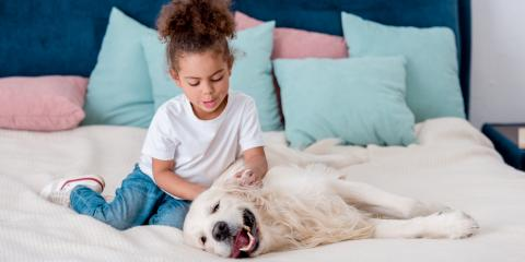 3 Ways to Help Your Dog With Seasonal Allergies, Sharonville, Ohio