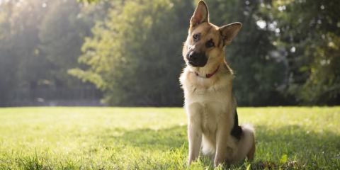Pet Care Essentials: How to Identify & Alleviate Arthritis in Your Pet, Cincinnati, Ohio