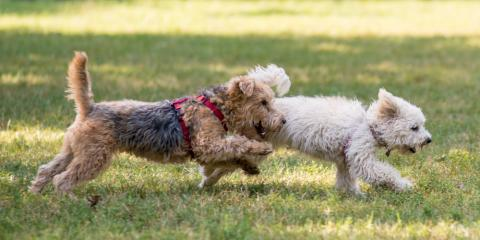 Pet Care Experts Answer FAQs About Keeping Your Animal Safe From Fertilizer, Cincinnati, Ohio