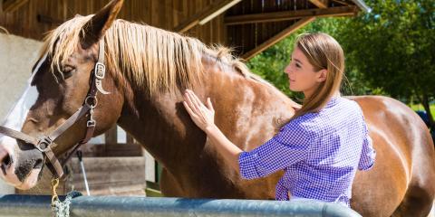 3 Common Equine Skin Conditions, Sharonville, Ohio