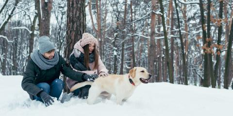 5 Tips for Keeping Your Dog's Skin Healthy During Winter , Sharonville, Ohio
