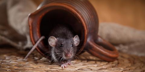 3 Ineffective Methods of Rodent Control, White Oak, Ohio