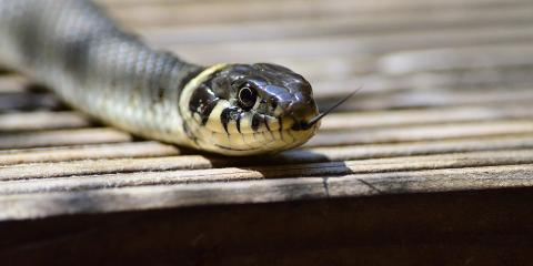 Cincinnati's Snake Removal Experts Share 3 Signs of an Infestation, Miami, Ohio