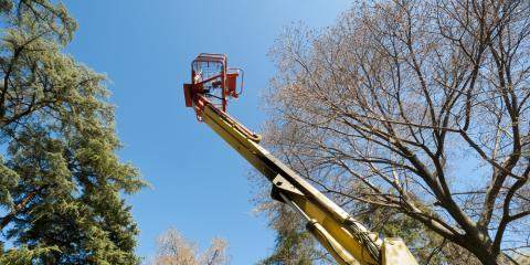 4 Factors to Keep in Mind When Performing Tree Work with Cranes, Blue Ash, Ohio