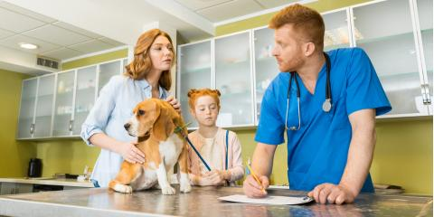 Vet Hospital Lists 4 Signs Your Dog Has a Urinary Tract Infection, Cincinnati, Ohio