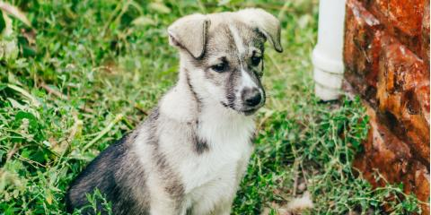 What You Need to Know About Kennel Cough, Montgomery, Ohio