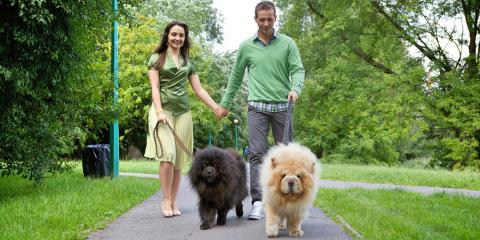 Veterinarians Share Advice on How Often to Walk Your Dog, Springfield, Ohio