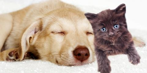 7 Questions a Veterinarian Would Ask Before Adopting a Pet, Springfield, Ohio