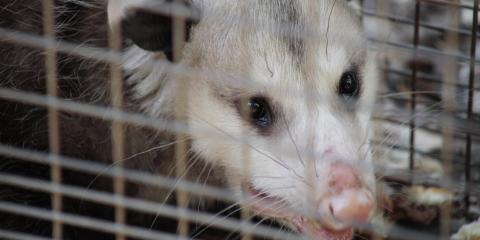 Wildlife Removal Experts Offer 3 Tips to Keep Animals out of Your Home, Miami, Ohio