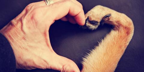 How to Include Your Pets When Estate Planning, Springfield, Ohio