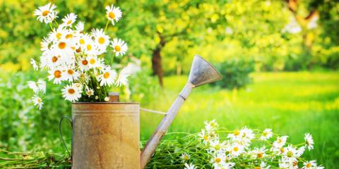 How to Get Your Garden Ready for Spring, Colerain, Ohio